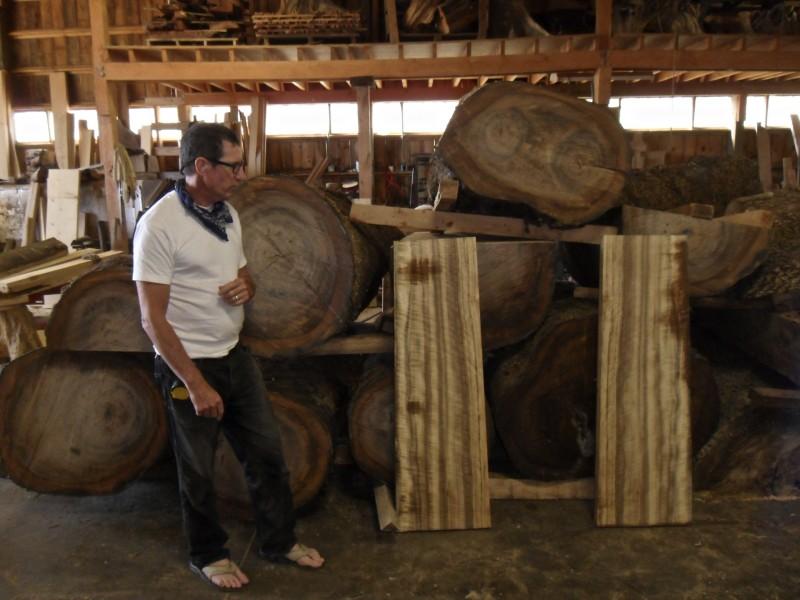 Bucked Myrtle Log